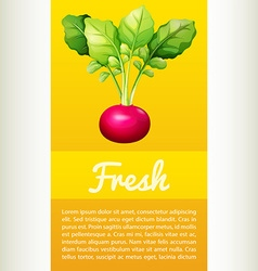 Poster design with fresh red radish vector