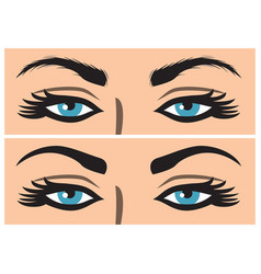 Eyebrow before and after correction vector