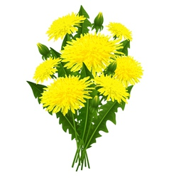 Bouquet of flowers dandelion vector