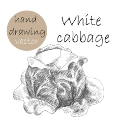 Hand drawn cabbage monochrome sketch vector