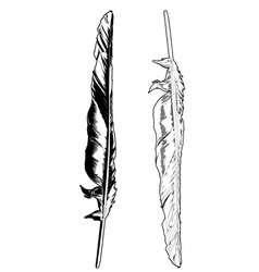 Crow feather vector