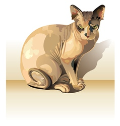 Sphynx cat vector image