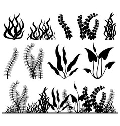 sea plants and aquarium seaweed set vector image