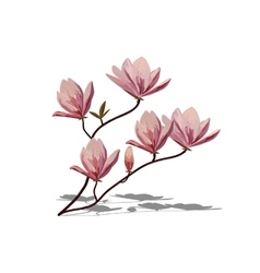 Blossom brunch of pink magnolia vector