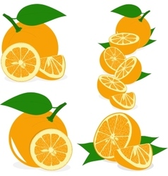 Orange slices collection of vector