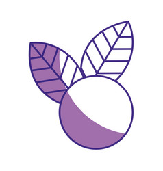 Grape fresh fruit icon vector