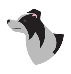 Dog head border collie vector