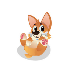 funny corgi lies on his back with bone in mouth vector image