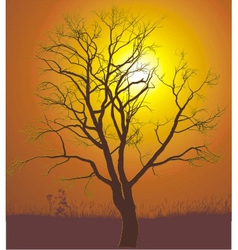 Walnut tree sunset vector