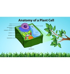 Anatomy of plant cell with names vector image
