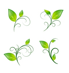 Leaf floral decoration eco set vector