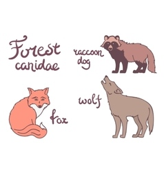 Forest canidae animals set vector