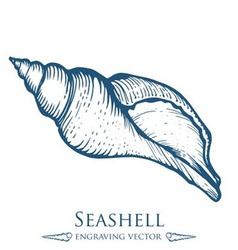 Seashell drawing vector