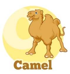 Abc cartoon camel vector