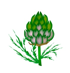 A fresh artichoke on a white background vector