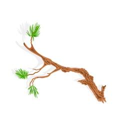 Pine tree branch vector
