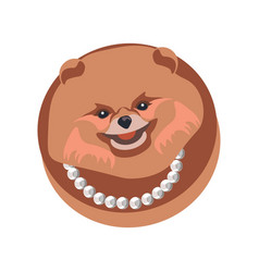 Pomeranian spitz longhaired dog in necklace on vector