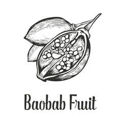 Baobab Fruit vector image vector image