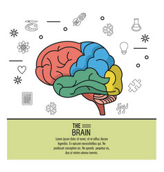 Colorful poster the brain with your different vector