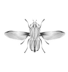 Fly 3d style for print tatto vector image vector image