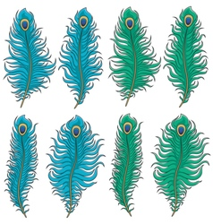 Set of colored peacock feather vector image