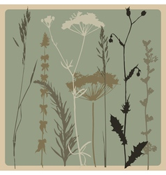 dry grass vector image