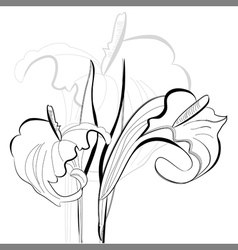 Monochrome calla lilies flowers vector