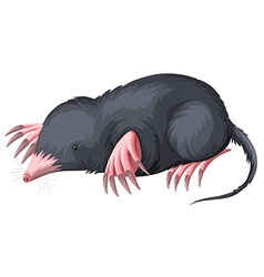 Mole with black fur vector