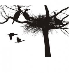 cormorant nest vector image
