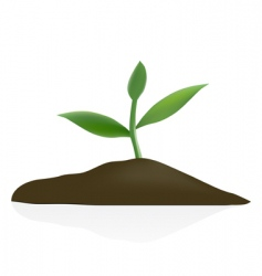 Young plant in dark soil vector