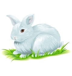 White easter bunny sitting on green grass vector