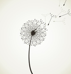Flower a dandelion4 vector