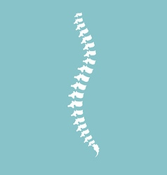 Spine diagnostic center vector