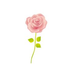 Pink rose with stem and leaves floral design vector