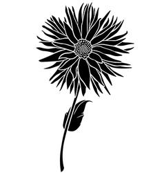 dahlia floral vector image vector image
