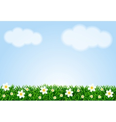 Landscape with grass and camomiles vector image vector image