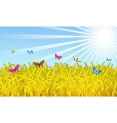 wheat fields vector image vector image