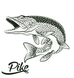 Jumping pike isolated vector