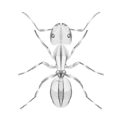 Ant 3d style for print tatto vector