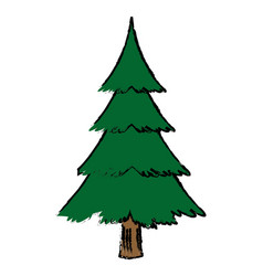 Christmas tree pine decoration ornament vector