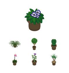 Isometric flower set of houseplant peyote vector
