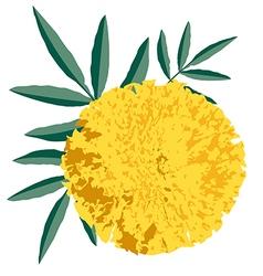Marigold preview vector