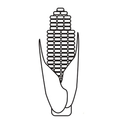 Outline corn cob ripe leaves icon vector