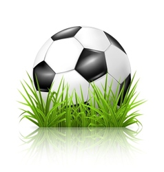 Soccer ball on grass vector