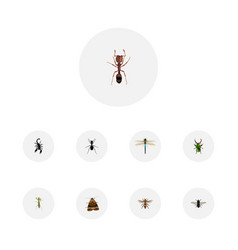Realistic emmet ant wasp and other vector