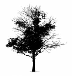tree silhouette black vector image