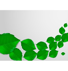 Realistic green leaves vector