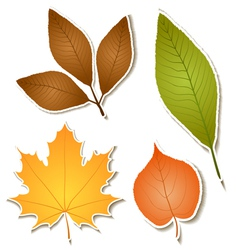 Autumn leaf sticker set vector image vector image