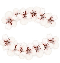 Blooming cherry blossom isolated on white vector