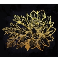 Sketch of lily lotus flower in linear style vector image